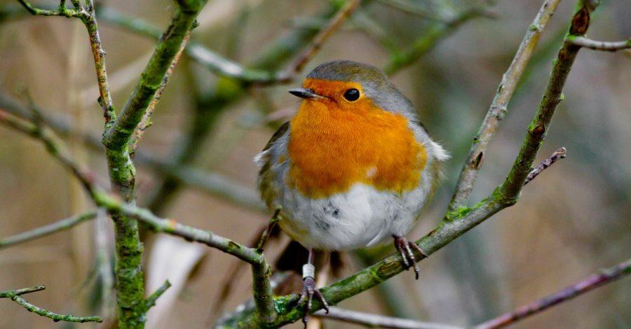 Keep an eye on the garden birds this winter