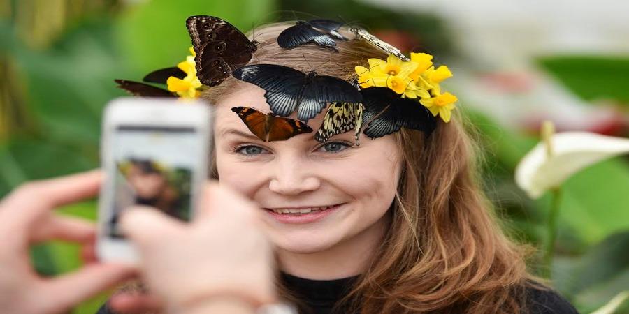 Exotic butterflies spread their wings at Blenheim