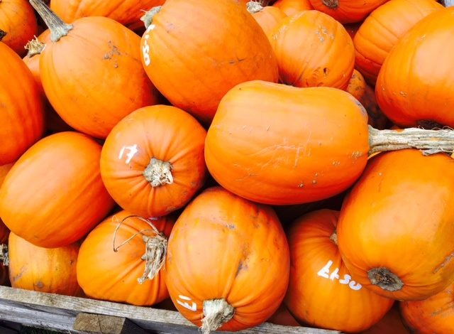 The Oxfordshire Pumpkin Festival returns for a seventh year to squash food waste