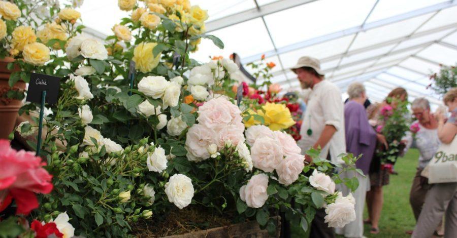 Designer Adds Dramatic Flourish to Blenheim Palace Flower Show