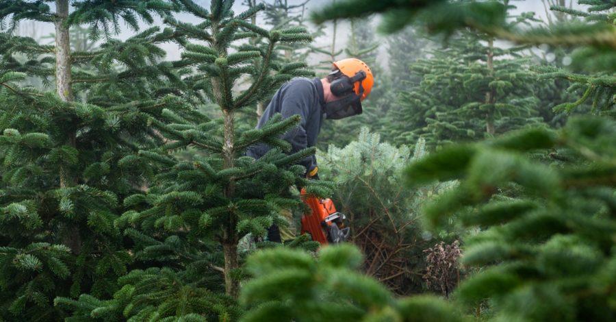 Festive Forest of Blenheim Christmas