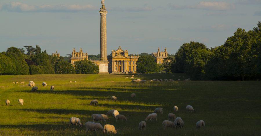 Blenheim Estate Offering Dream Role for Shepherd