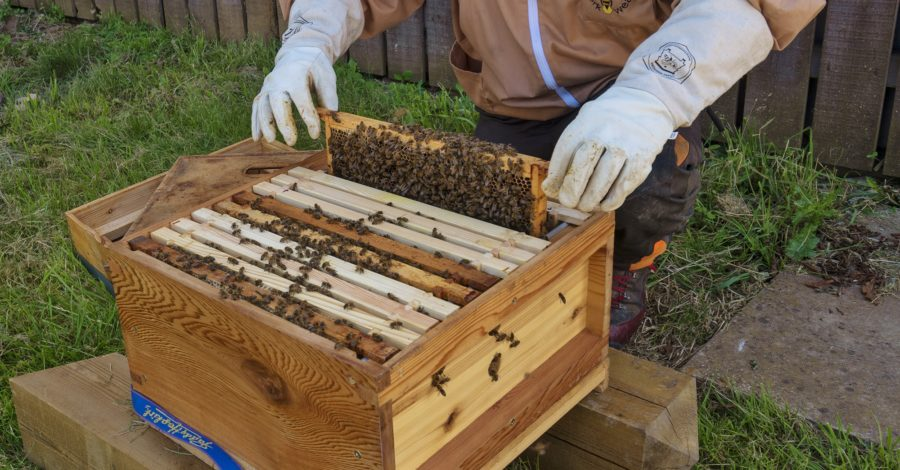 Queen Bee busy at Blenheim