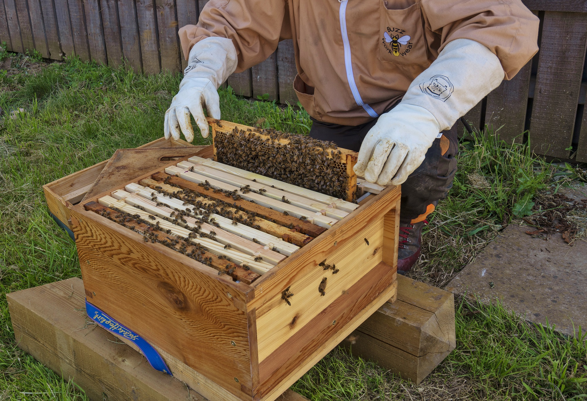 The-Blenheim-Palace-bees-in-their-new-hive-PIC-Pete-Seaward
